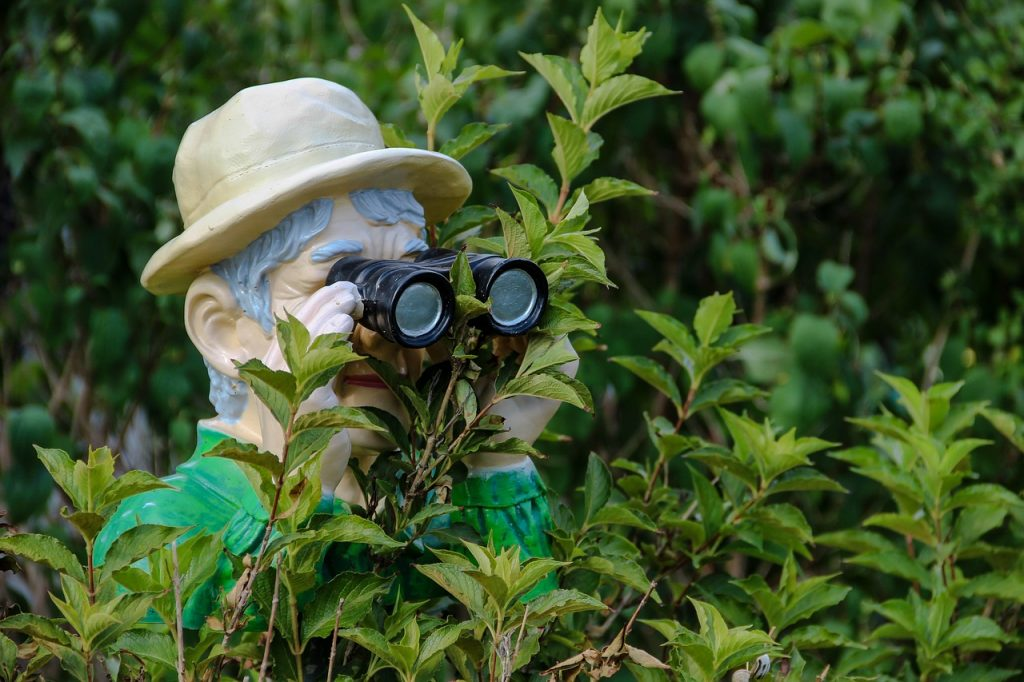 10 Best Compact Binoculars - Review & Buyer's Guide