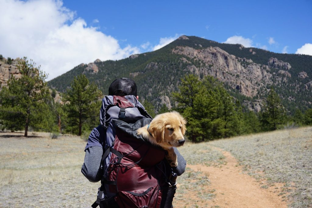 Travel Carrier Backpacks for Cats and Dogs – Review & Buyer's Guide
